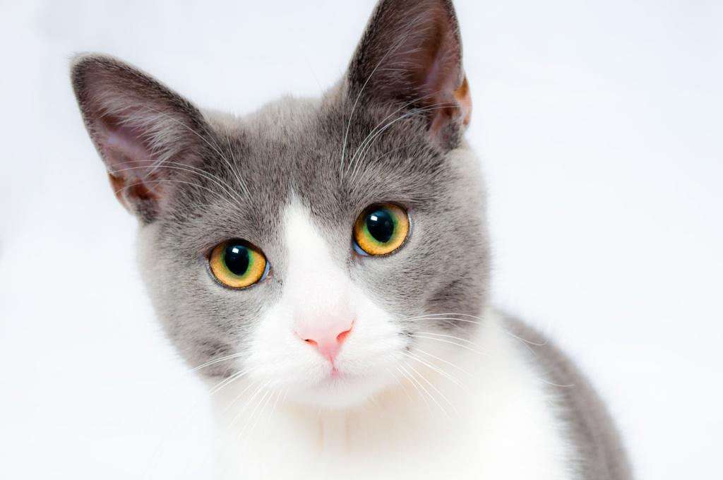 коронавирус у кошки что это